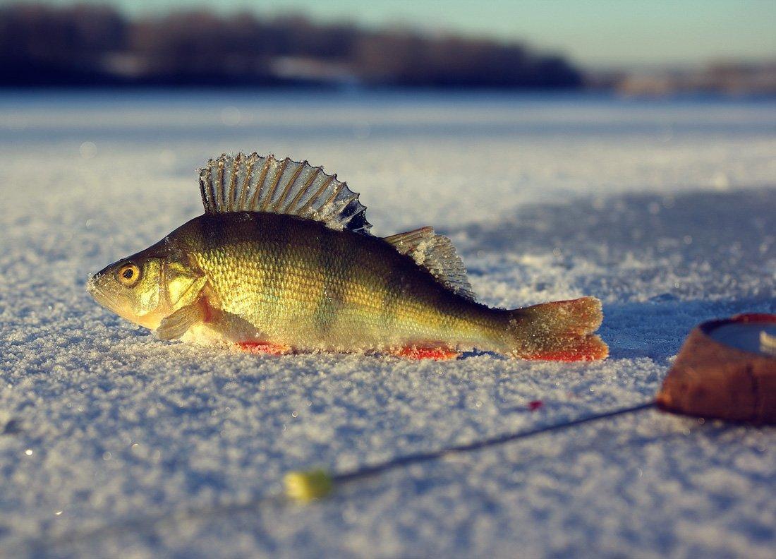 картинки для рабочего стола зимняя рыбалка полотно сегодня выступает